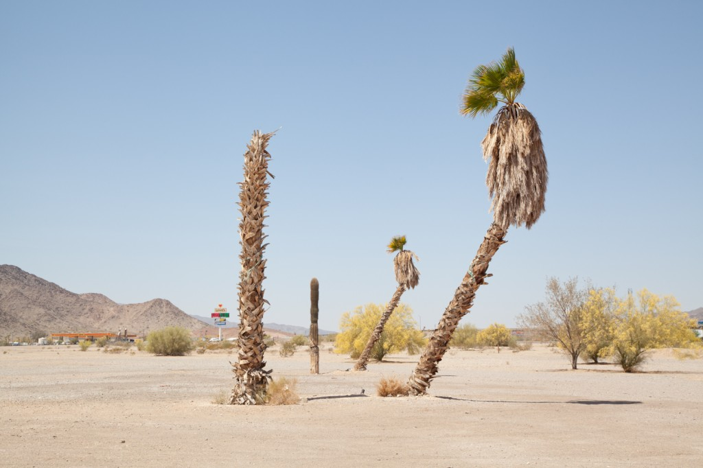 "William LeGoullon (Photographer), ""Palms"" - www.legoullonphotography.com"