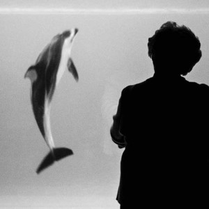 Nicholas Pinto Photographic Dream