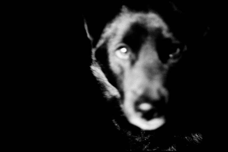 A scary looking dog photographed by Hajime Kimura