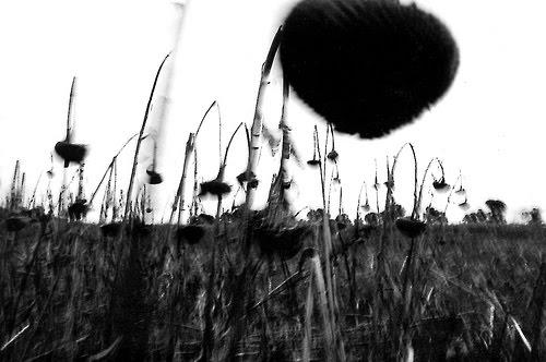 """Daniel Muchiut """"Las Flores del Mal"""" www.danielmuchiut.com.ar"""