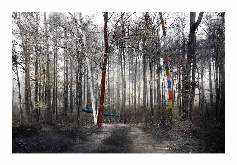 Some colorful spots in a forest in this photograph from Sergio Fasola called bosque