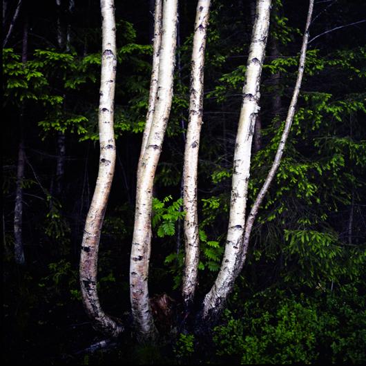 Geir Tönnessen (Norway) - Contemporary Photographer - www.geirt.com