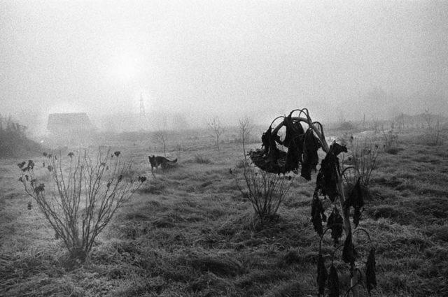 Image from Latvian photographer Stanislavs Olehno