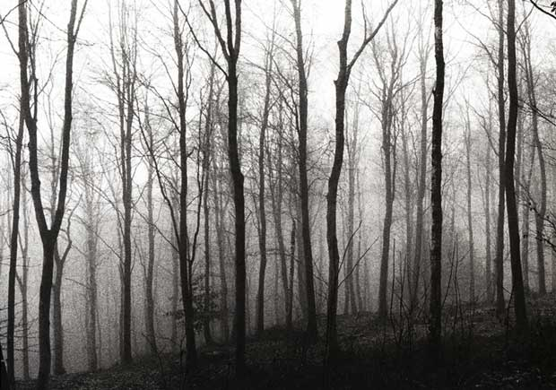 Black and white image of a forest taken by Steven Taylor