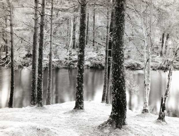 Winter image with snow in a forest taken by Steven Taylor