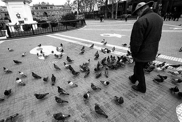 A man and a great number of pigeons on the Plaza de Mayo in front of the Casa Rosada in downtown Buenos Aires