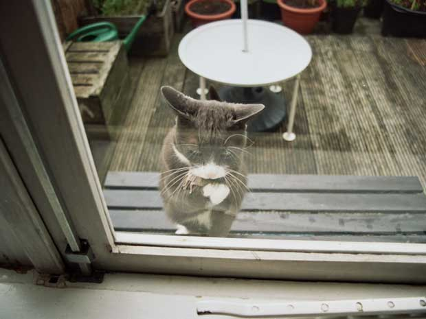 Maarten van Riel took a picture of a cat looking through a window