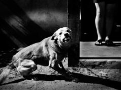 "A dangerous looking dog photographed by Margaret M. de Lange for her book ""Surrounded By No One"""