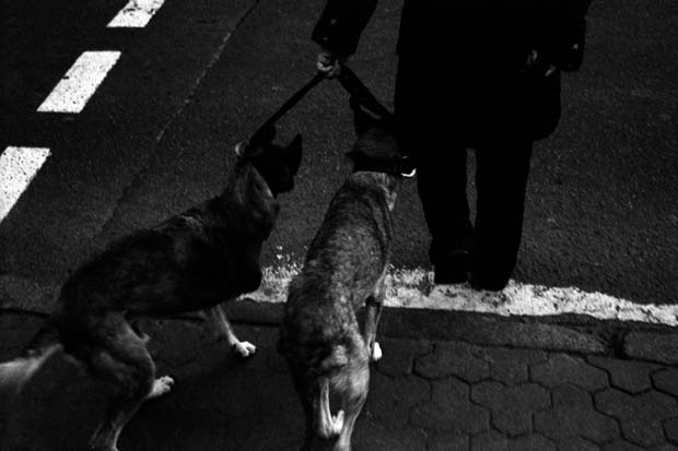 A man and his two dogs about to cross a street copyright Matjaz Rust photography