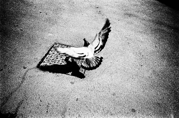 A pigeon landing on a sidewalk can be seen on this image by Nicolas Hermann