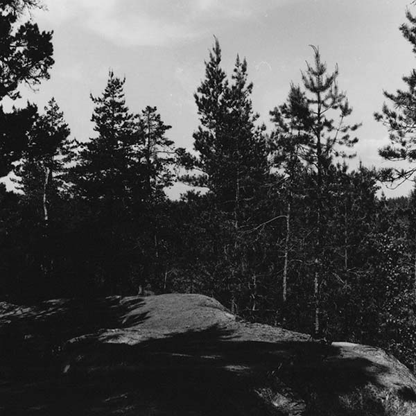 Black and white image of a forest by landscape artist Polly Balitro