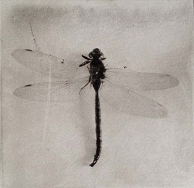Photographer Jeanne Wells uses traditional photographic processes and analog techniques