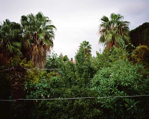 Image from the series Refuge Dreamgrove by Italian photographer Georges Salameh